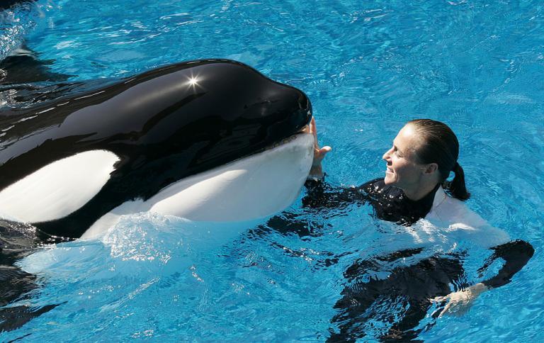 Orca Whale Program at Seaworld
