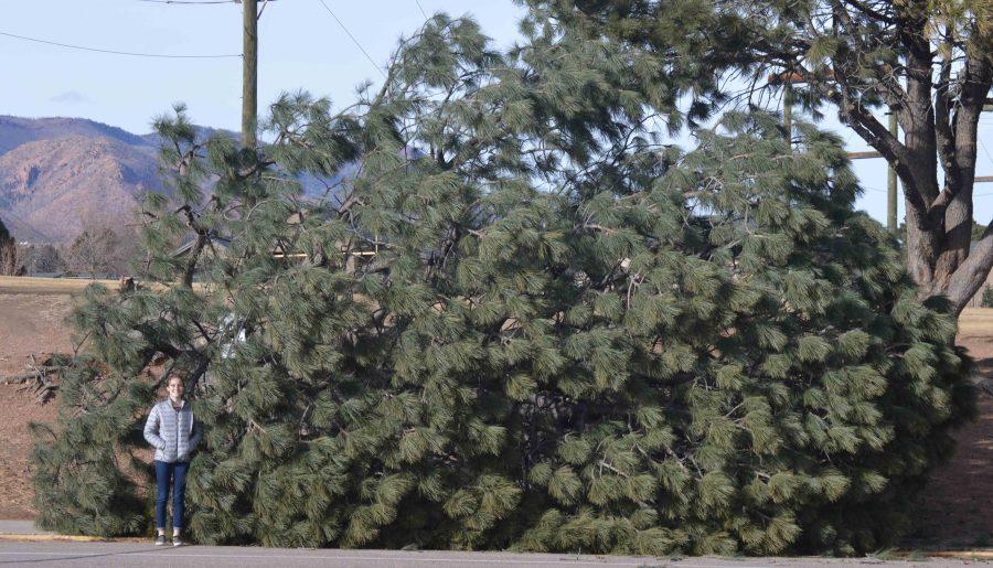 Junior Taylor Dutton smiles next to the fallen tree in Coronado's bus loop.
