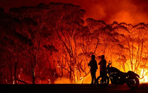 Exploitation of the Australia Bush Fires: Avoiding Scammers